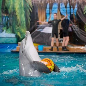 Дельфинарии, океанариумы Монино