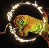 Цирки в Монино
